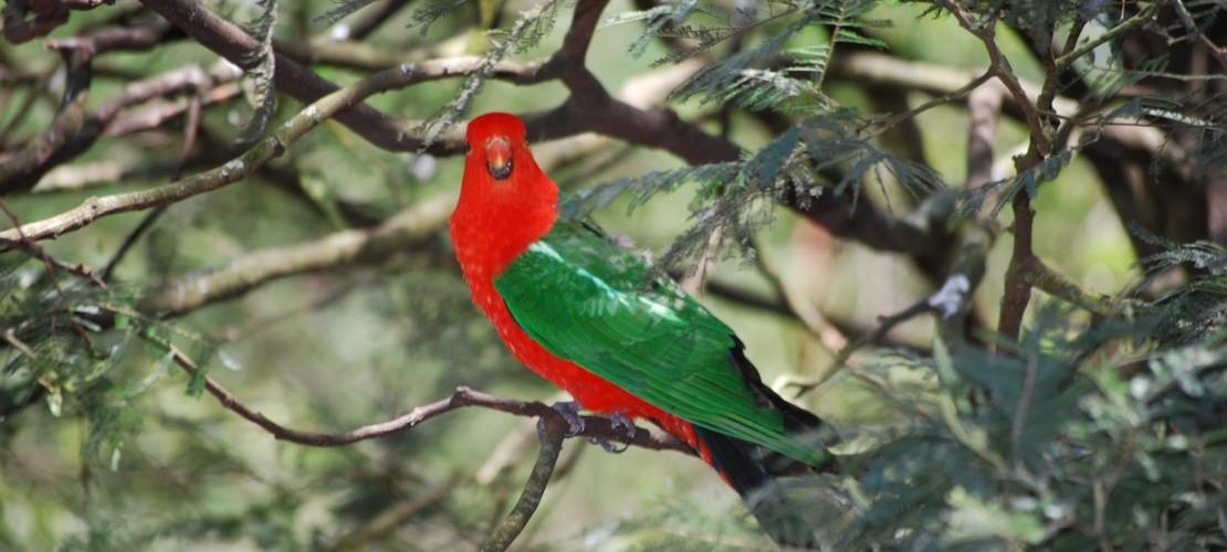 Papageien: Intelligent und bunt