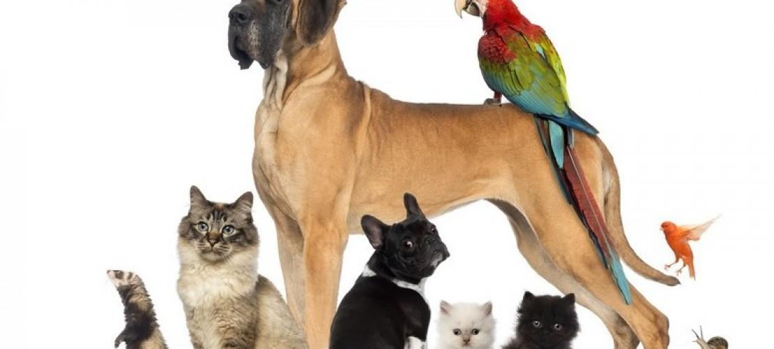 Haustier-Serie: Allgemein
