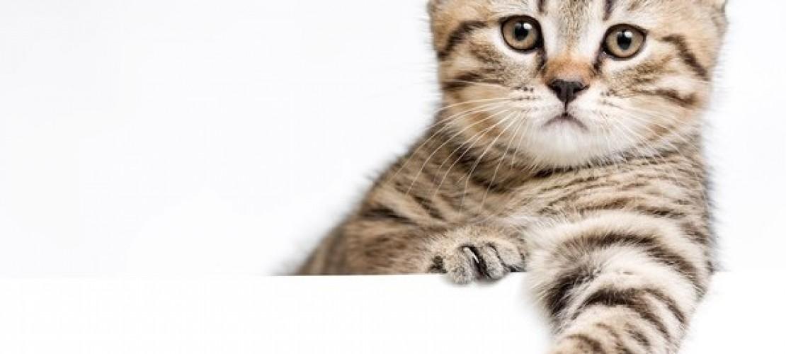 Haustier-Serie: Die Katze