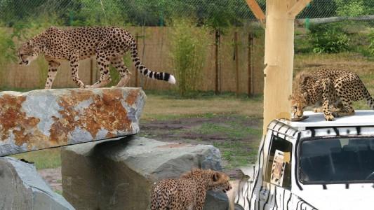 Safaripark in Stukenbrock