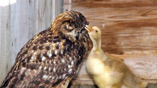 Ungleiche Paare in der Tierwelt