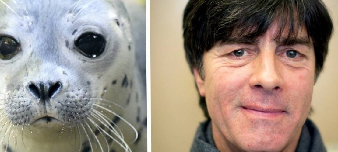 Seehund Jogi, oder: was von der WM übrig bleibt