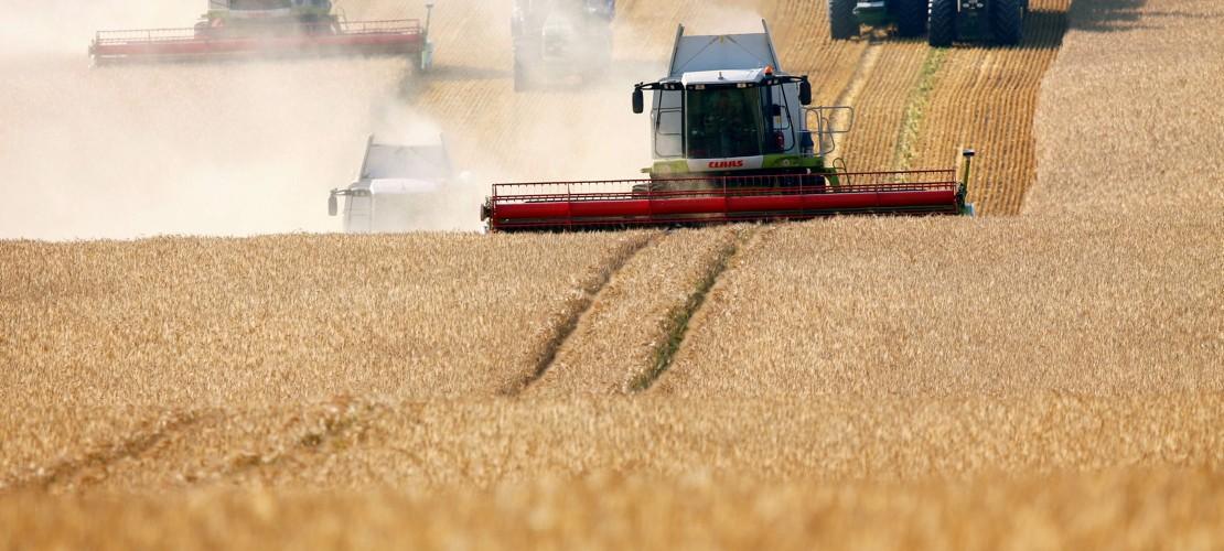 Bereit für die Ernte