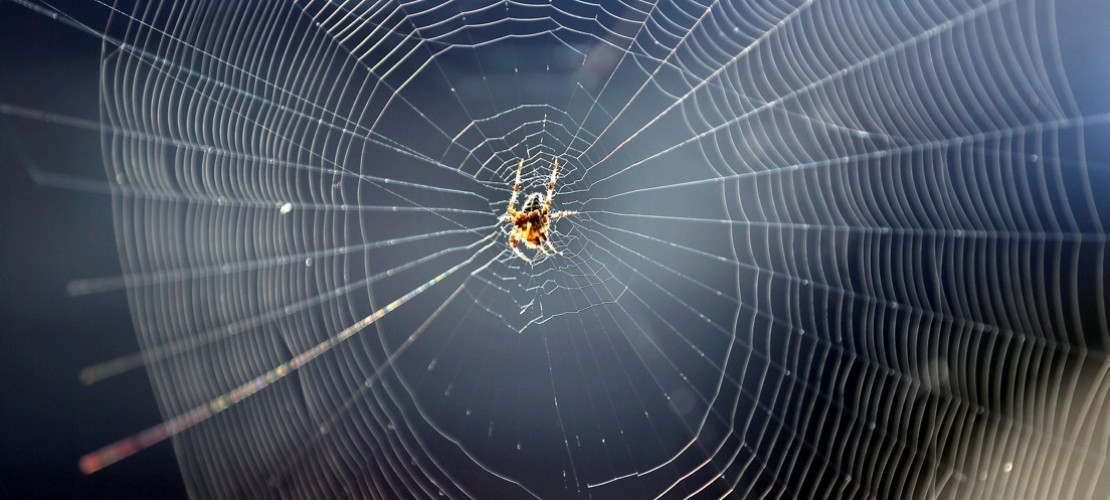 Wie entsteht ein Spinnennetz?