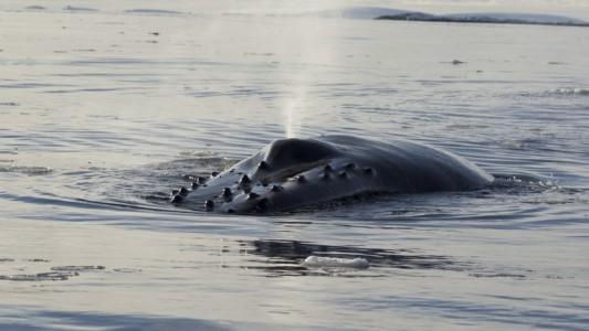 Warum stoßen Wale Wasser aus?
