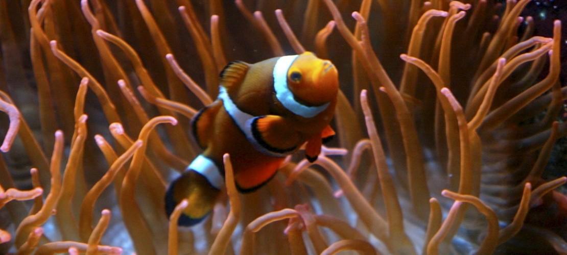Können sich Fische unterhalten?