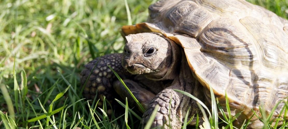 Haustier-Serie: Schildkröten