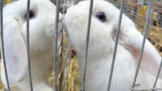 Haustier-Serie: Das Kaninchen