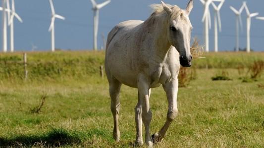 Haustier-Serie: Pferde