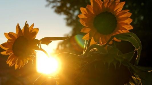 Genieß die letzten Sonnenstrahlen und mach dir ein schönes Wochenende! (Foto: dpa)
