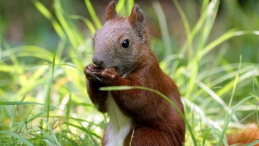 Wie finden Eichhörnchen ihre Nuss-Verstecke wieder?