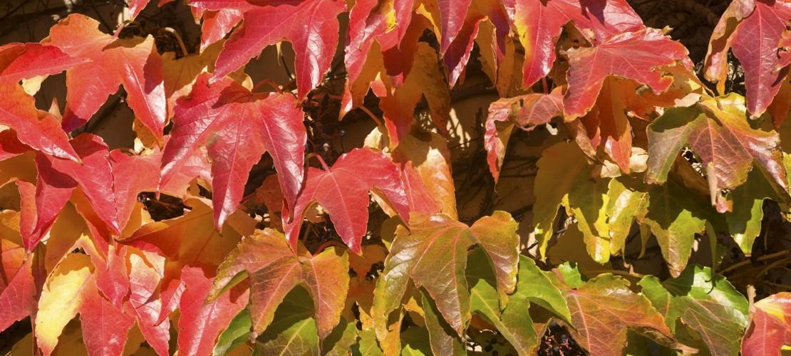 Warum werden die Blätter bunt?