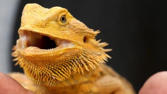 Haustier-Serie: Exoten
