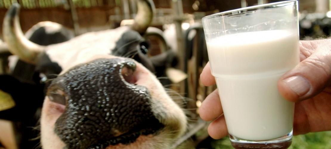 Wie kommt die Milch in die Tüte?