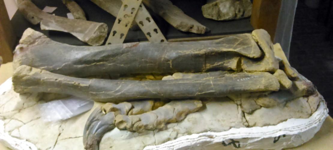 Was ist ein Fossil?