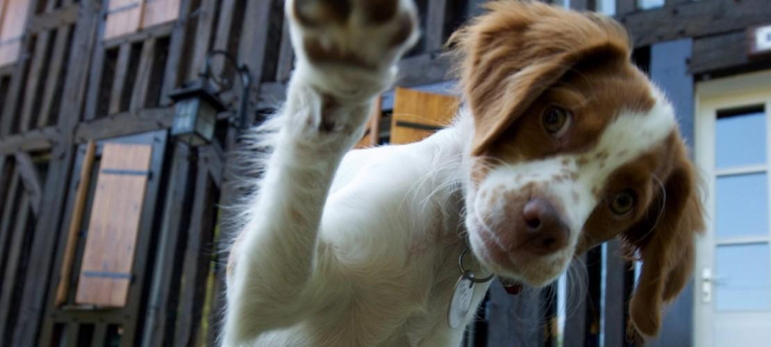 Haustier-Serie: Hunde
