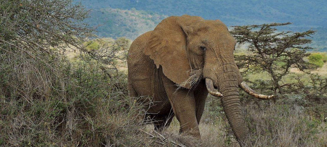 Donald Trump und die Elefanten