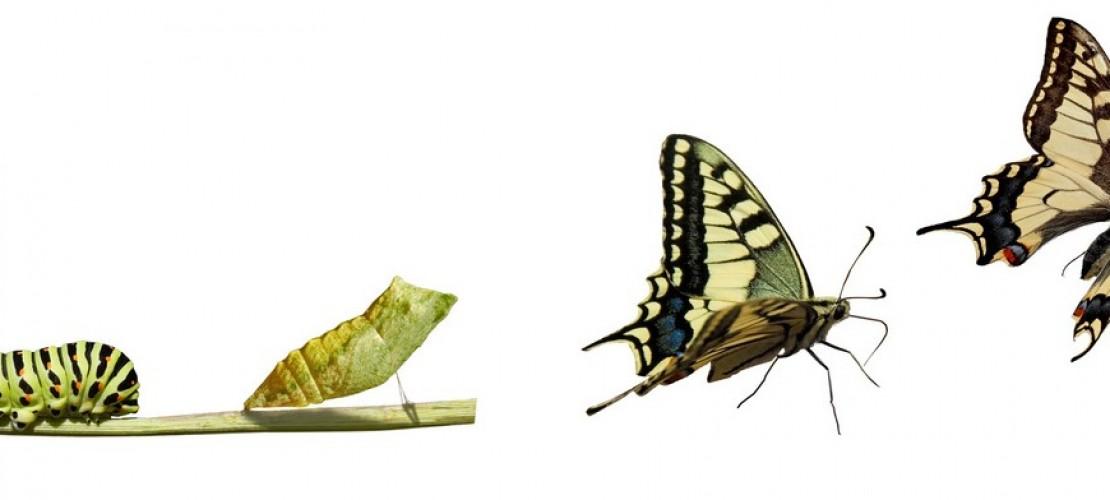 Was ist eine Metamorphose?
