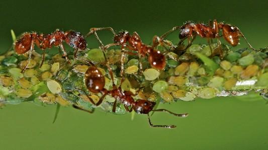 Was ist eine Symbiose?