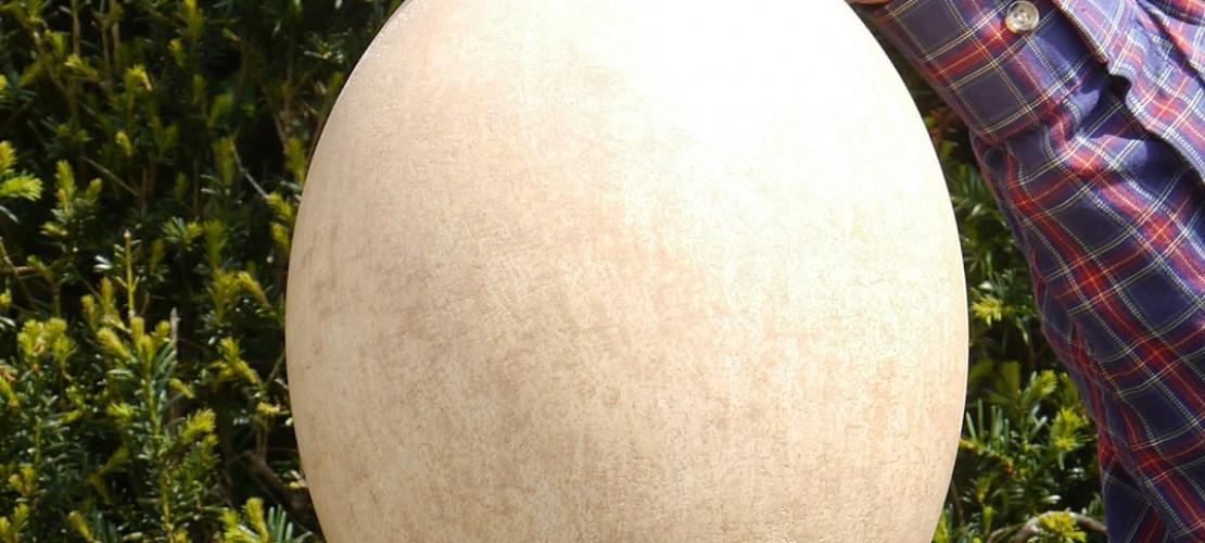 Viel Geld für ein riesiges Ei