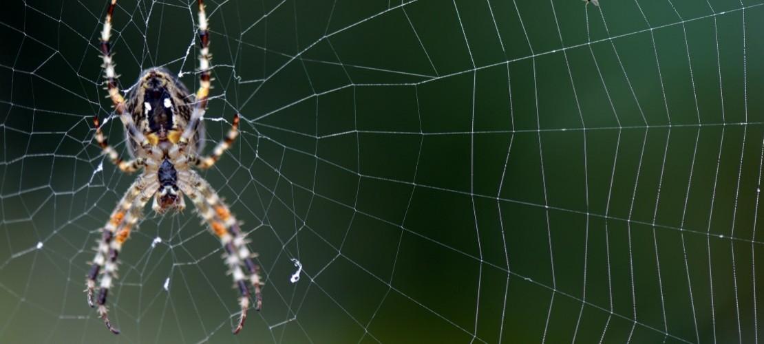 Wie spinnen Spinnen ihre Netze?