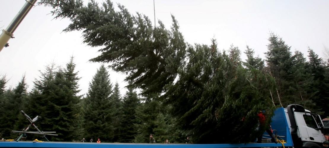 Ein Baum für die Kanzlerin