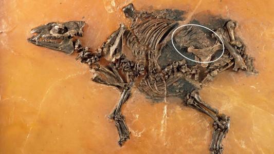 Was ist ein Urzeit-Pferd?