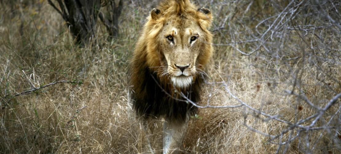 Tiere: Gewinner und Verlierer 2014