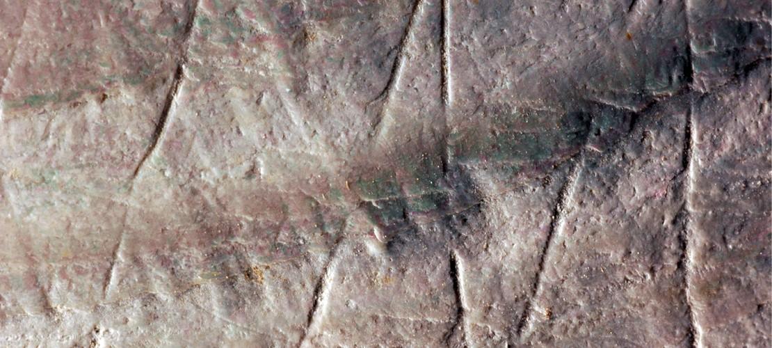 Uralte Muschel-Muster