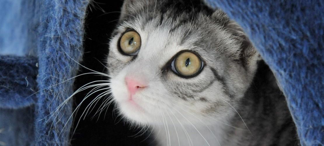 Sie ist unter anderem Schuld daran, dass es nicht mehr so viele Vögel, vor allem Kiwis, in Australien und Neuseeland gibt: Die Hauskatze. (Foto: dpa)
