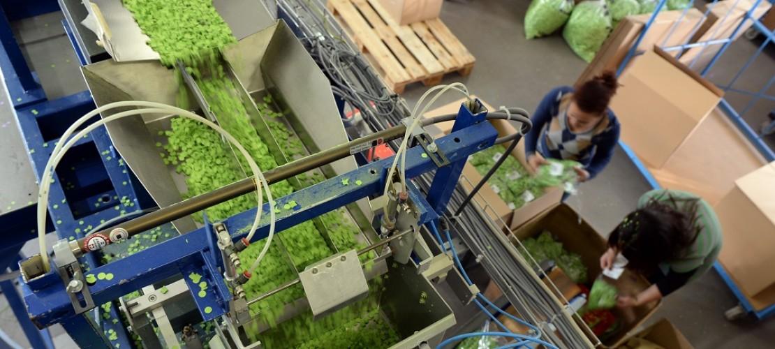 So wird Konfetti in der Fabrik hergestellt