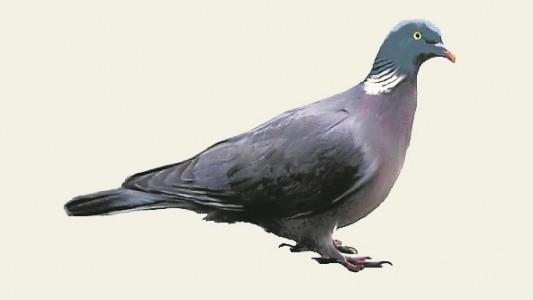 Im Winter fliegen nicht so viele Vögel herum. Aber bei der Futtersuche kann man sie dennoch super beobachten.