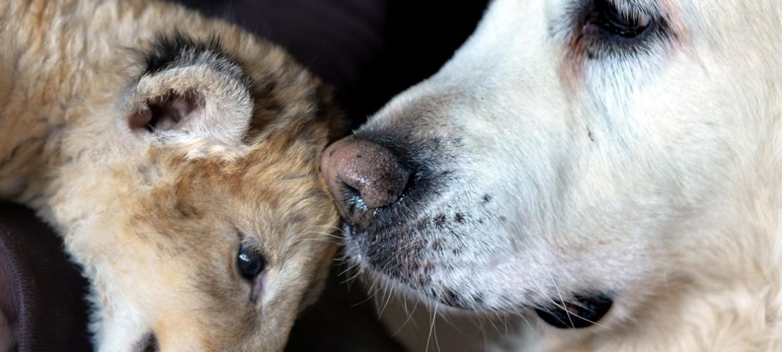 Malor mag das Fell von Hund Kiki. (Foto: dpa)