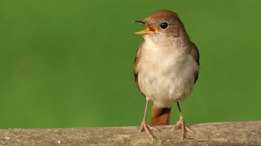 Spannende Fakten über den Vogelgesang