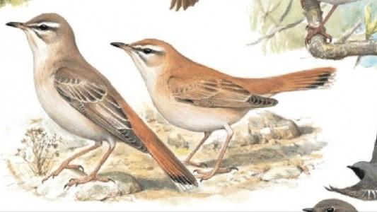 """Mit diesen Vogelstimmen kannst du Vögel in der Natur ganz leicht erkennen. Die Illustrationen stammen aus dem Buch """"Was fliegt denn da? Alle Vogelarten Europas in 17000 Farbbildern"""". Foto: Kosmos Verlag"""