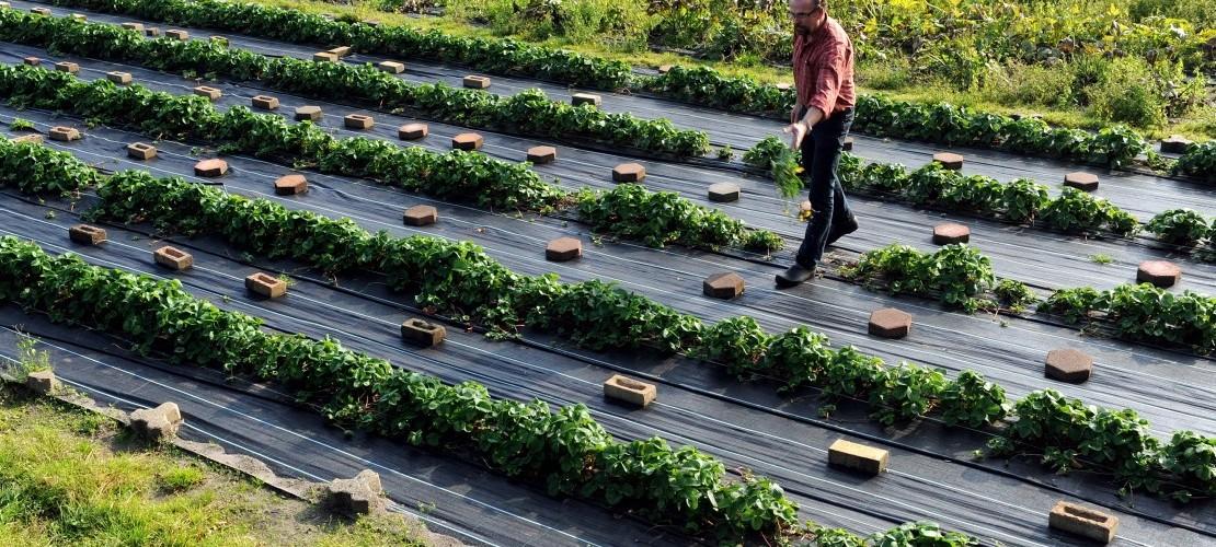 So wird Bio-Obst und -Gemüse angebaut