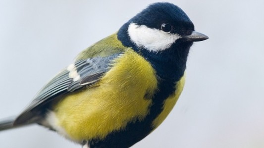 Die Blaumeiser ist einer der Vögel, die bei der Vogel-Zählung im letzten Jahr am häufigsten gesichtet wurde. (Foto: dpa)