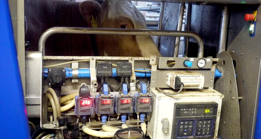 In manchen Ställen übernehmen Maschinen das Melken. (Foto:dpa)