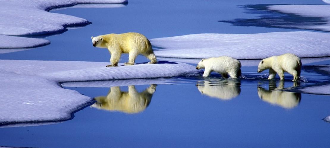 Eisbären leben in der Arktis. Am Wochenende bekommen wir eine Idee, wie kalt es dort ist. (Foto: dpa)