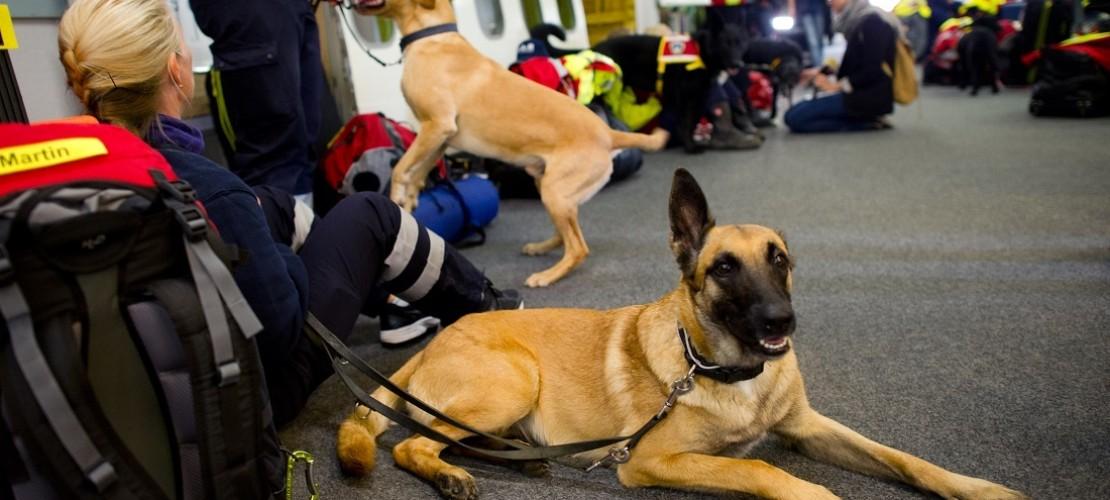 Auch die Hilfsorganisation I.S.A.R. schickte Suchhunde und Helfer nach Nepal. Die Tiere sollen unter Trümmern Überlebende finden. (Foto: dpa)