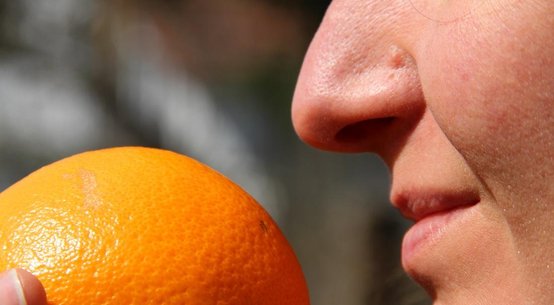 Hmmm, Orange! Die menschliche Nase kann unglaublich viele Gerüche erkennen. (Foto: dpa)