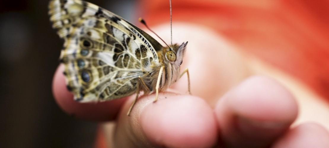 Die Verwandlung: Flieg, Schmetterling, flieg!