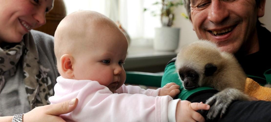 Wenn ein Affe und ein Mädchen Freunde werden