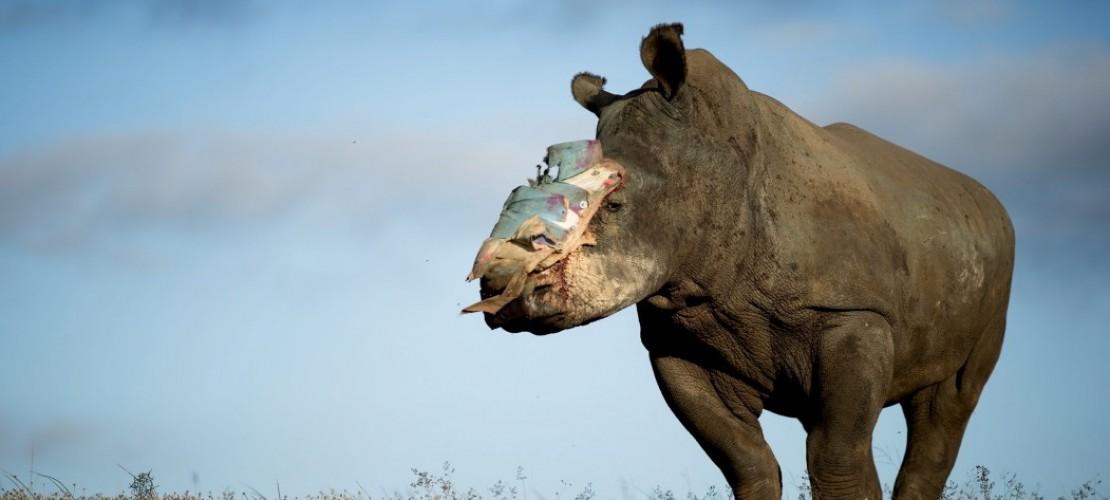 Alle drücken Nashorn Hope die Daumen