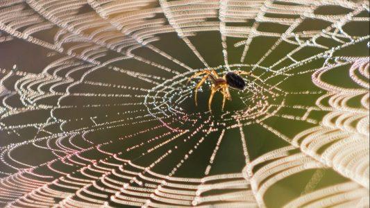 Wie stark ist ein Spinnennetz?