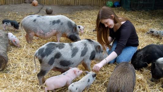 Justines Haustiere sind Minischweine