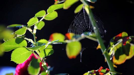Warum gehen Spinnennetze schwer kaputt?