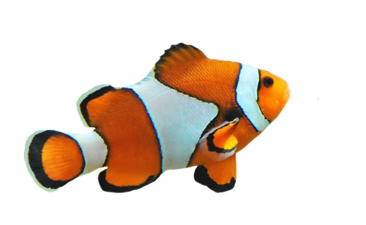 Fische mann sagt treffen ab