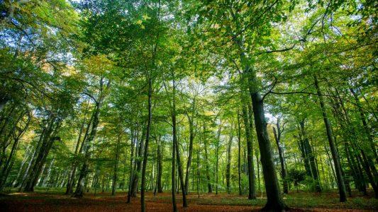 Geheimwissen über Bäume