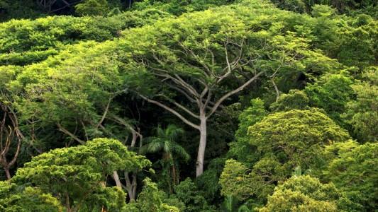 Wie viele Bäume gibt es auf der Welt?